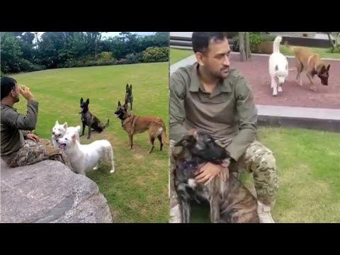 #msdhoni-playing-with-his-pets-#belgianmalinois,#whitehusky,#dutchshepherd