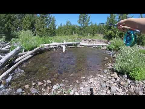 Native Cutthroat Trout in Yellowstone Backcountry pt 2