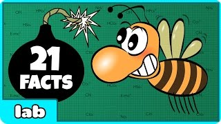 Bees Can Detect Bombs? 21 Amazing Facts By HooplakidzLab