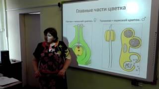 Фрагм урока Цветок учителя биологии Огарковой Л В pds