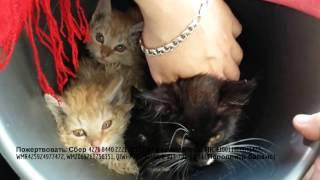 История спасения котят| Поймали кудрявого котенка | saving homeless kittens