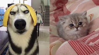 🤣cute And Funny Cats 😺 Dogs 🐶 Videos Compilation Best Moment Of The Animals  7   Cuteanimalshare