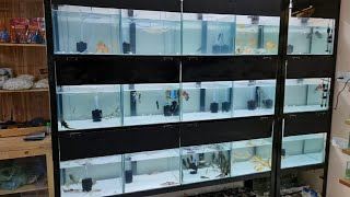 Xotic Aquatics Aquarium Fish S…