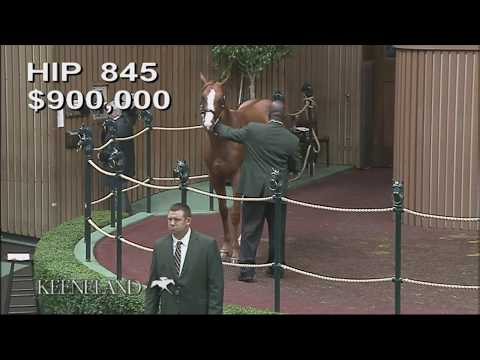 Good Magic as Keeneland September Yearling