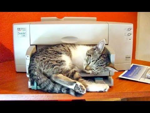 🚩 Не печатает принтер вообще