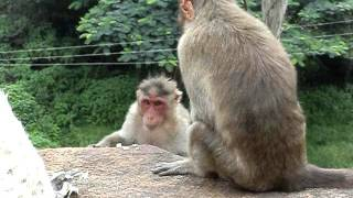 monkey sex.AVI