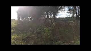 Участок 18 соток СНП Княжино на берегу р Ока