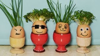 How to Make Eggshell Planters