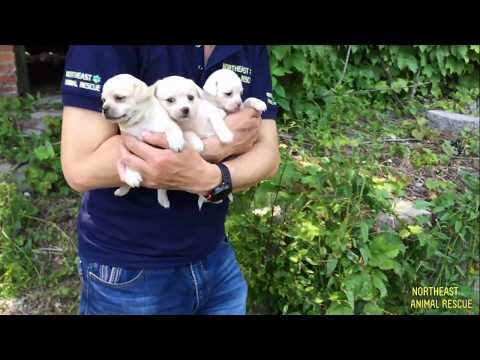 Rescue Puppies Who Lost Their Mom in an Abandoned Factory - Dog Rescue Action
