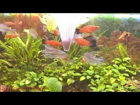 Кормушка для рыб конус - пирамида. Кормление аквариумных рыбок. Аквариумистика.