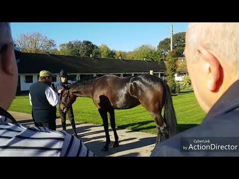 Nicky Henderson Stable Visit for MPR