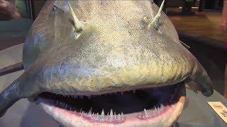 Sakın SUYA GİRMEYİN ! En Tehlikeli 10 Balık