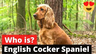 English Cocker Spaniel: What should you know about this Dog breed?