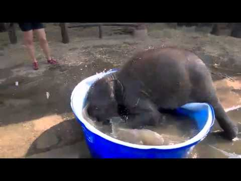baby elephant taking a bath at elephantstay thailand youtube. Black Bedroom Furniture Sets. Home Design Ideas