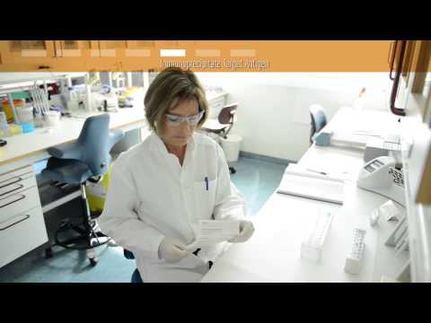 How to use Dynabeads® for immunoprecipitation