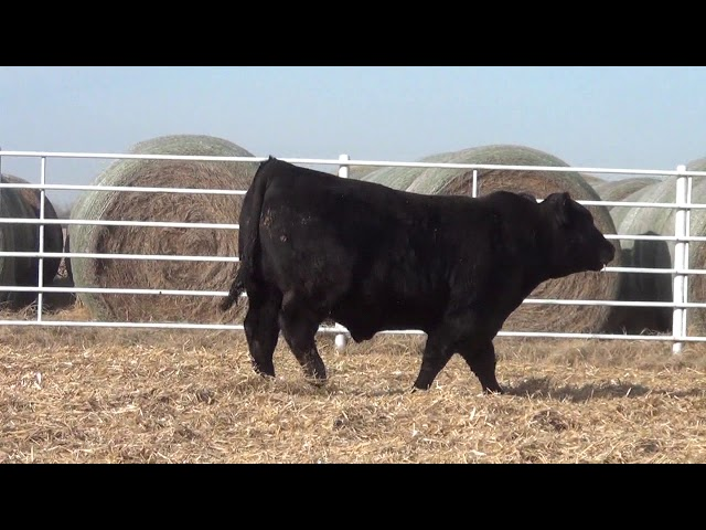 Express Ranches Lot 197