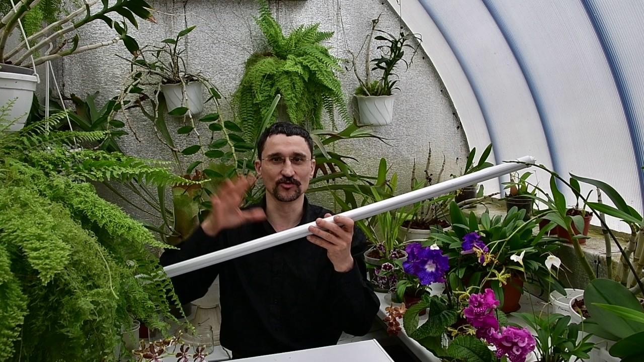 Об искусственном освещении растений