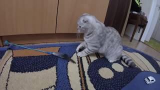 😻Приколы с Котенком Забавная и Смешная Кошка🐱Игрушка для Котенка своими руками