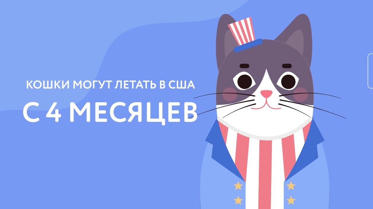 Перевозка и доставка животных (собак, кошек) в США. Правила ввоза в США