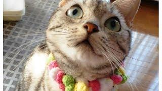 母ちゃんに全力疾走まっしぐら!~いつだってどこだって駆けつけてくれる猫 - Cat'll Definitely Rush to Me thumbnail