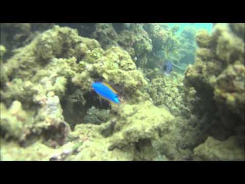 Petite promenade sous marine en Nouvelle Calédonie