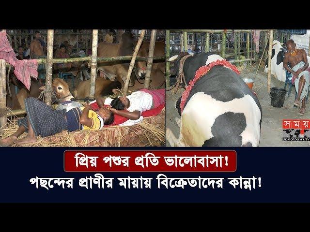 প্রিয় পশুর প্রতি ভালোবাসা! | পছন্দের প্রাণীর মায়ায় বিক্রেতাদের কান্না! | Cow Lover | Somoy TV