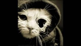 Смешные забавные котята. Часть №1