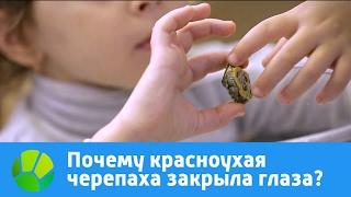 Почему красноухая черепаха закрыла глаза?