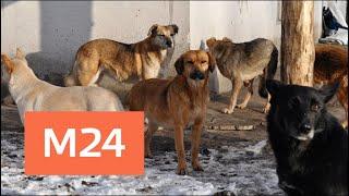 Бродячие собаки насмерть загрызли мужчину в Подмосковье - Москва 24