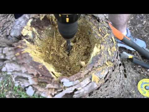 How To Make a Stump Planter