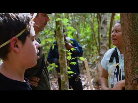 Descubrimiento de la selva