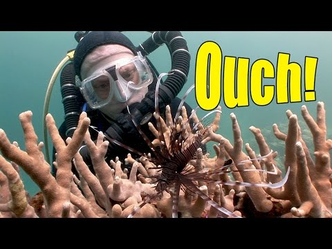 Venomous Fish (HD) | JONATHAN BIRD'S BLUE WORLD