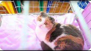 КОШКА ВЛОГ: Международная выставка кошек, люблю КОТЭ, Любителям кошек посвящается