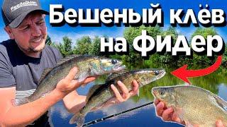 Рыбалка на ФИДЕР! Попал на БЕШЕНЫЙ КЛЕВ! Плотва, густера, карась, подлещик, судак.