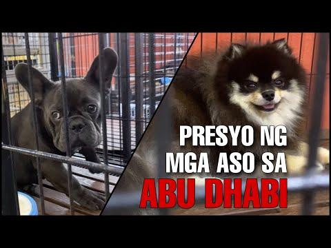 Dog Price in Abu Dhabi | Dog Price in UAE 2020