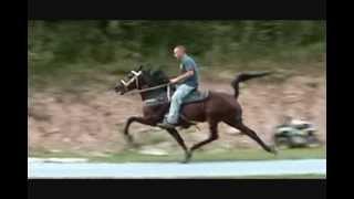 sue wee 6yr old keg shod mare