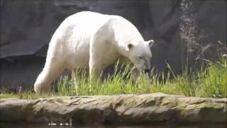 ZOOM Erlebniswelt Gelsenkirchen - Rundgang durch alle Welten (Alaska,Afrika,Asien)