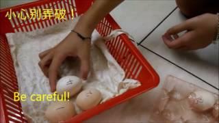 如何进行人工孵蛋How to incubate eggs using artificial incubator