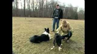 Les chiens de chasse  Reportage