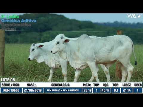 LOTE 08 -  DUPLA - REM 10655I, REM 10649I - 3º Leilão Genética Aditiva Expogenética 2020