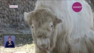 В Алматинский зоопарк все чаще стали приносить «ненужных» животных (25.10.19)