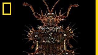 Beauty Through the Microscope: Bugs Like You've Never Seen Them Before | Short Film Showcase