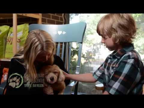 Iowa Veterinary Wellness Center in Des Moines IA