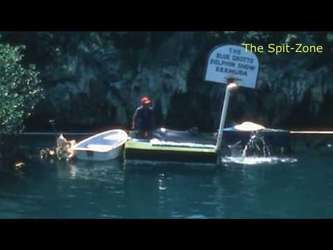 Bermuda Trivia Scramble - Blue Grotto Dolphin Show