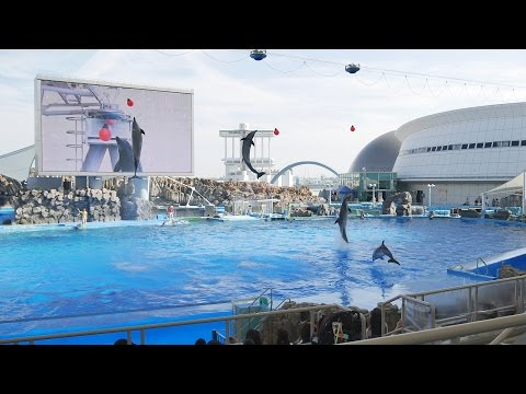 4K 名古屋港水族館 イルカショー 2016 Dolphin show at Port of Nagoya Public Aquarium