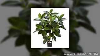 Горшки для растений интернет магазин(, 2013-12-26T21:39:07.000Z)