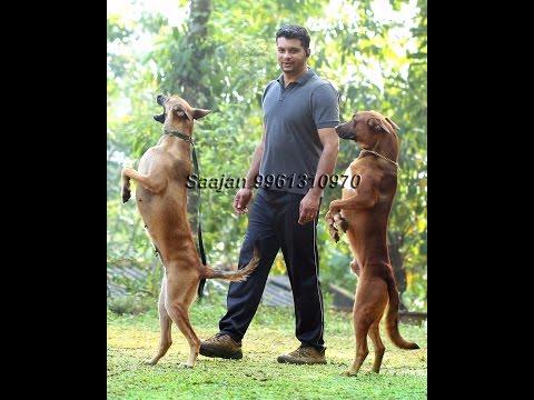 saajan saji cyriac dog training school..09961310970