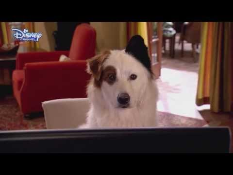 Dog With A Blog - The Kids Find Out Stan Blogs - Stan's Secret Revealed? - Disney Channel UK HD