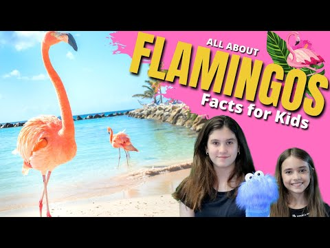 🦩 FLAMINGO Facts for Kids | Learn All About #Flamingos