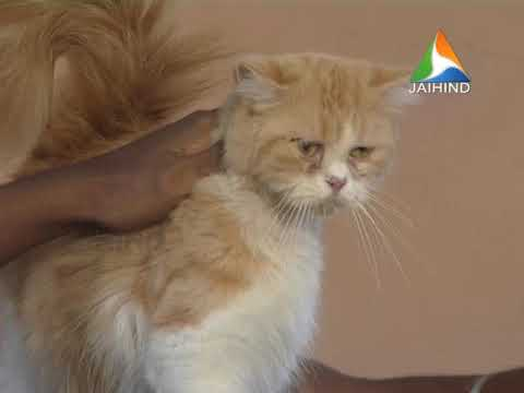 Vishakh And His Cats In Pretty Pets | 17-09-2018 | ¦ Latest News│Jaihind TV